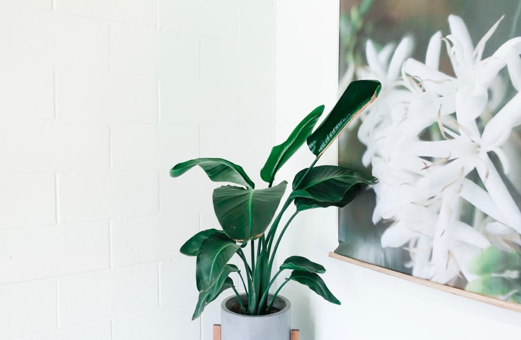 natural elements in interior design